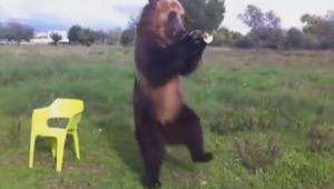 happy ol' bear